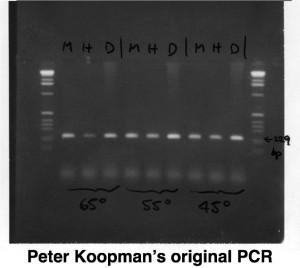 Sox_PCR